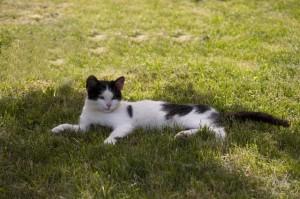 日陰で休む猫様