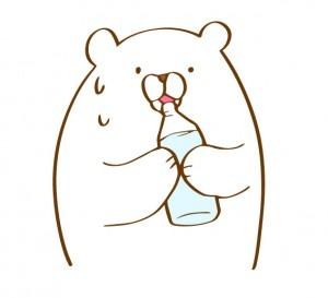 水分補給をする白クマ