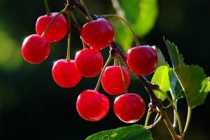 cherries-826113_640
