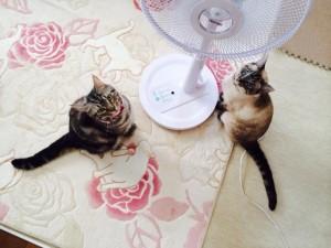 扇風機の前に座る猫2匹