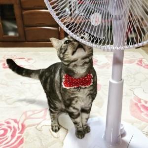 扇風機に近づく猫