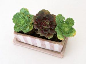 プランターIN葉野菜