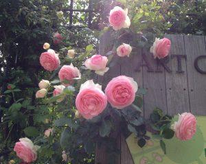 アートガーデンの薔薇