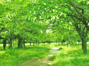 新緑あふれる場所