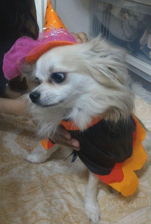 帽子は嫌な犬