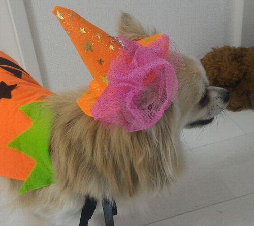 魔女帽子をかぶってくれた犬